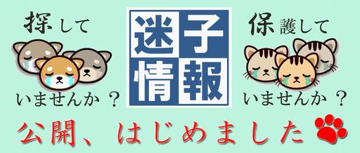 千葉県の柏市、迷子猫の飼い主&保護した人を結びつける情報公開を開始