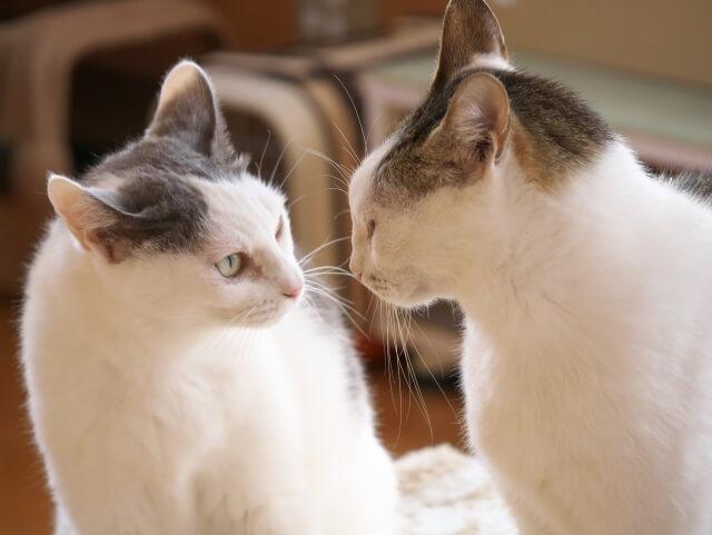 相性の悪い猫同士