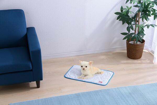 アイリスプラザの夏用猫ベッド、クールブランケットの使用イメージ