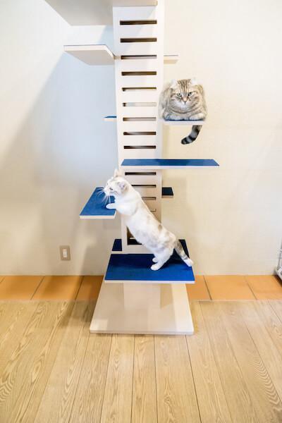 キャットタワー「necobacoT」のインディゴカラー(藍色)でくつろぐ猫