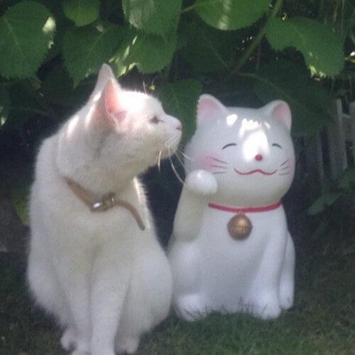 農家民宿 ニャンバーワンの看板猫、ユキ