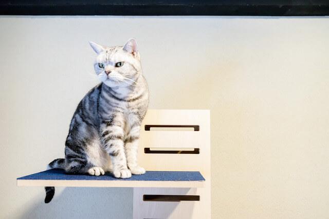 キャットタワー「necobacoT」のインディゴカラー(藍色)の上から眺める猫