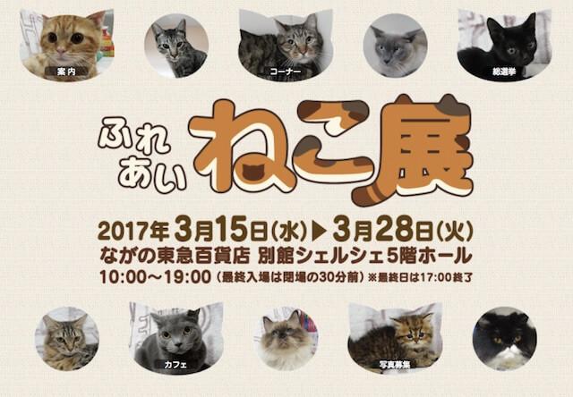 世界中の珍しい猫と触れ合えるふれあいねこ展 「ながの東急百貨店」