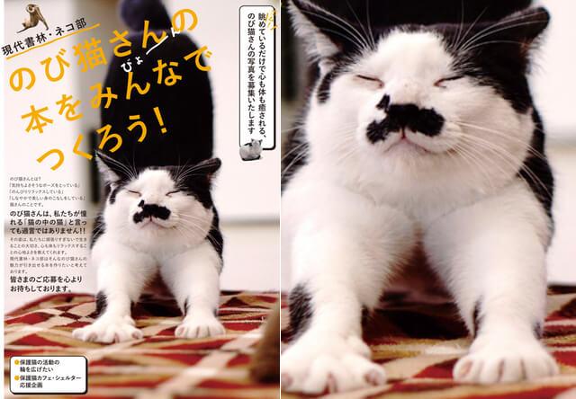 今夏に発売予定の書籍「猫ストレッチ(仮)」が猫の写真を募集中