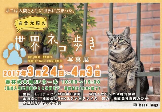 写真展「岩合光昭の世界ネコ歩き」が石川県の金沢市で開催