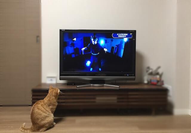 NHKの「ネコがみるみるテレビ」を見てみた&猫に見せてみた