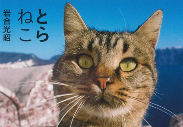 トラ模様の猫ばかりを集めた岩合光昭さんの新刊「とらねこ」