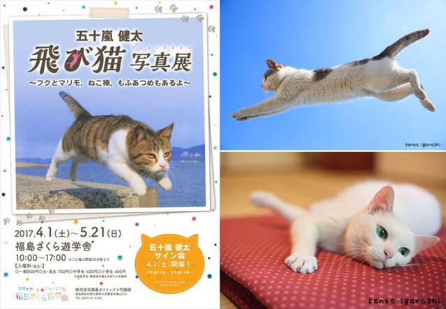 写真家・五十嵐健太氏のネコ写真展が栃木、福島、京都で開催