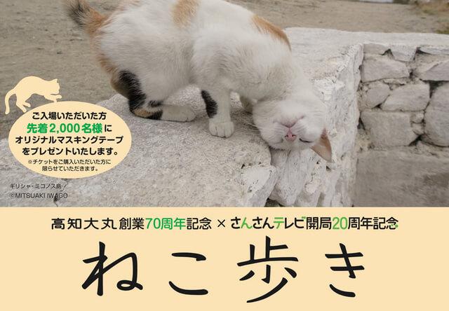 岩合光昭 写真展「ねこ歩き」4月20日から高知大丸で開催