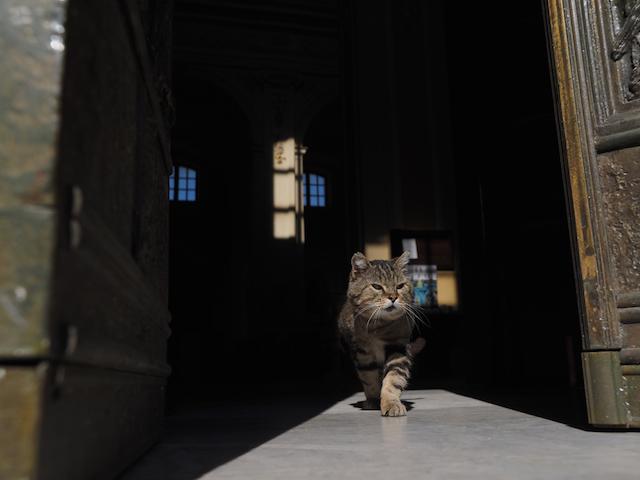 シチリア島のキジトラ猫(岩合光昭 写真集「とらねこ」に収録)