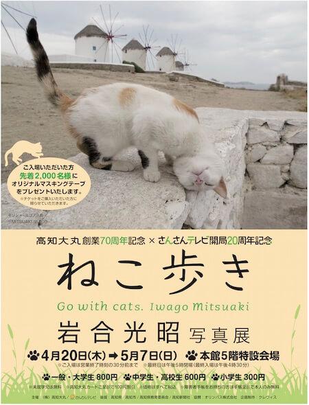 高知大丸で開催される岩合光昭写真展「ねこ歩き」 のポスター