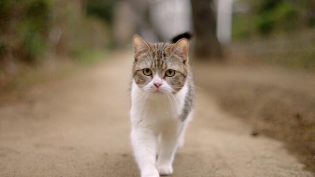 理想の物件を探し歩く猫