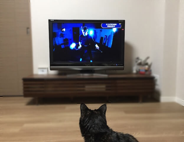 NHKの「ネコがみるみるテレビ」を見ているサビ猫