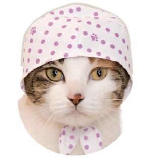 猫のかぶりもの、あじさい色×豆絞り