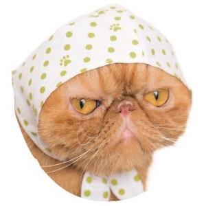 猫のかぶりもの、辛子色×豆絞り