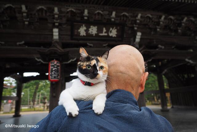 岩合光昭さん「ねこの京都」、お寺のお坊さんと猫