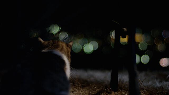公園で途方に暮れる猫