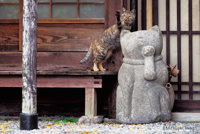 岩合光昭さん「ねこの京都」、猫の置物と猫
