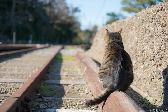 あおいとり氏のネコ写真作品、まあるい猫の後ろ姿