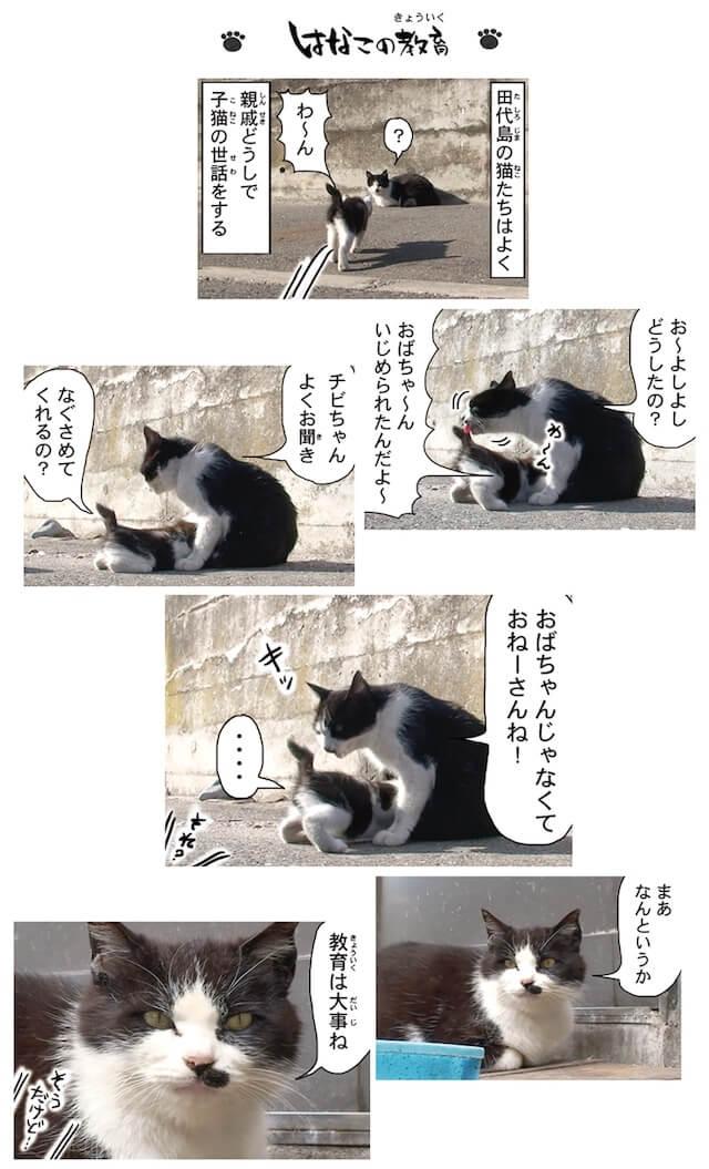 フォトコミック「田代島ねこ便り」猫マンガ誌面イメージ3