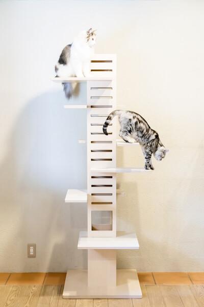 猫が高いところから見下ろせるキャットタワー「necobacoT」