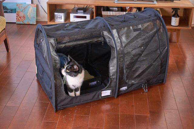 猫キャリーバッグ「ペットツインカーゴ」のブラックカラーを猫が使用しているイメージ