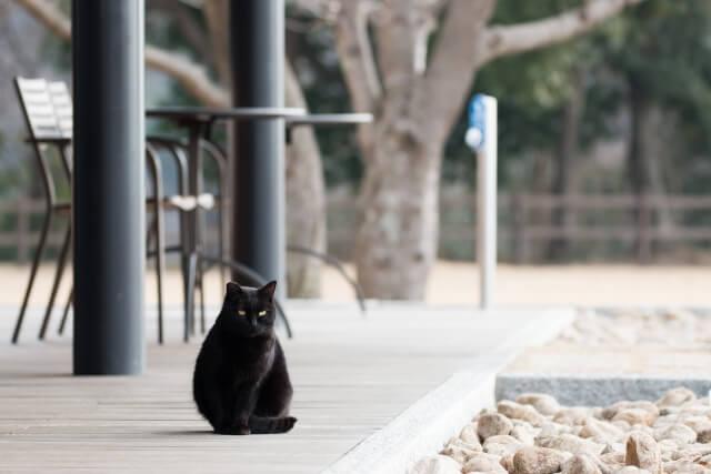 日本でも人気の高い黒猫