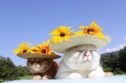 かご猫シロちゃんファミリーの写真展