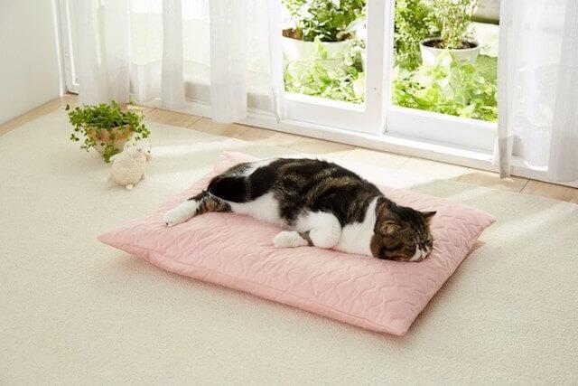 老猫の介護に最適、たまくら体位変換クッション」