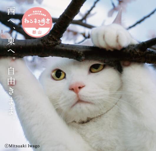 岩合光昭 写真展「ねこ歩き」@うすい百貨店