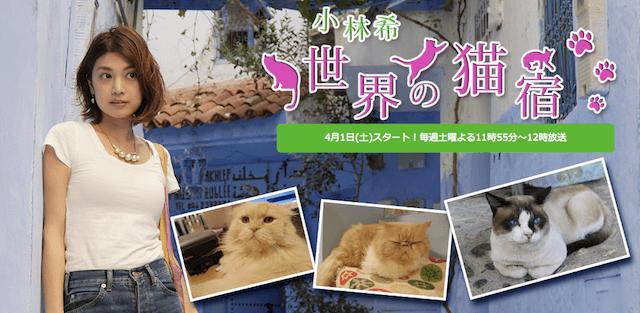BSフジで放送の猫テレビ番組「小林希 世界の猫宿」