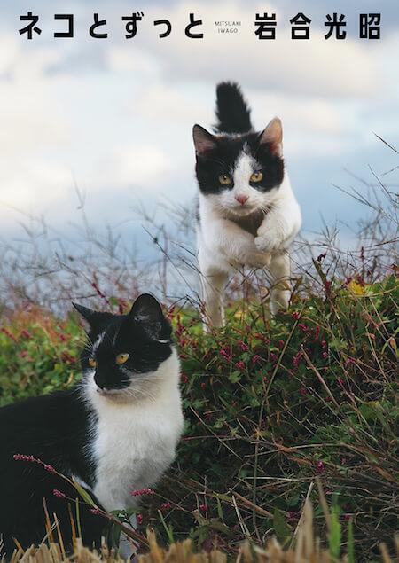 岩合光昭 写真集「ネコとずっと」の表紙