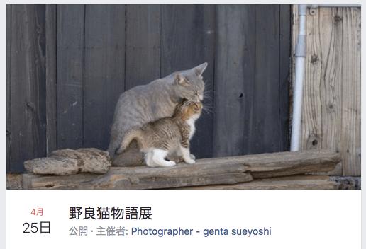 ハッシュタグ「#僕らの居場所は言わにゃいで」の賛同者による野良猫写真展