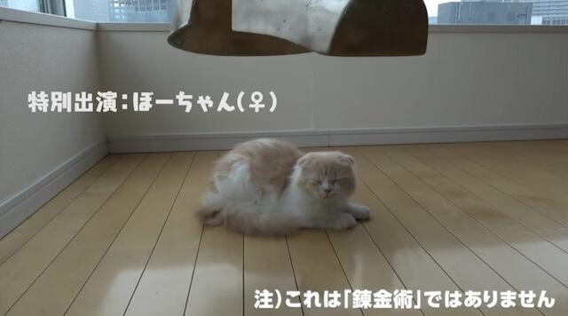 猫のエイプリルフール、鋼の錬金術師の追加キャスト、猫のぼーちゃん