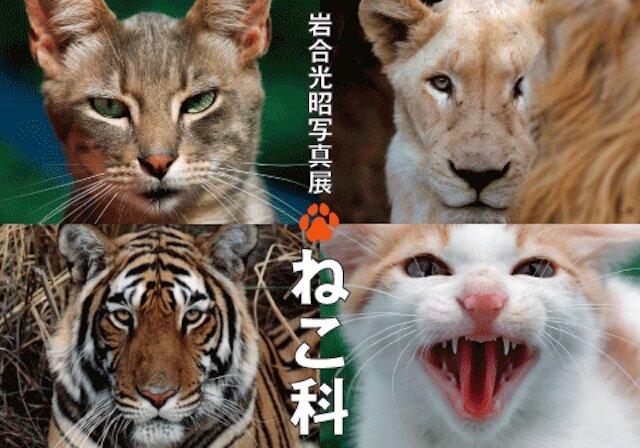 岩合光昭氏による初の野外写真展「ねこ科」7月まで札幌で開催