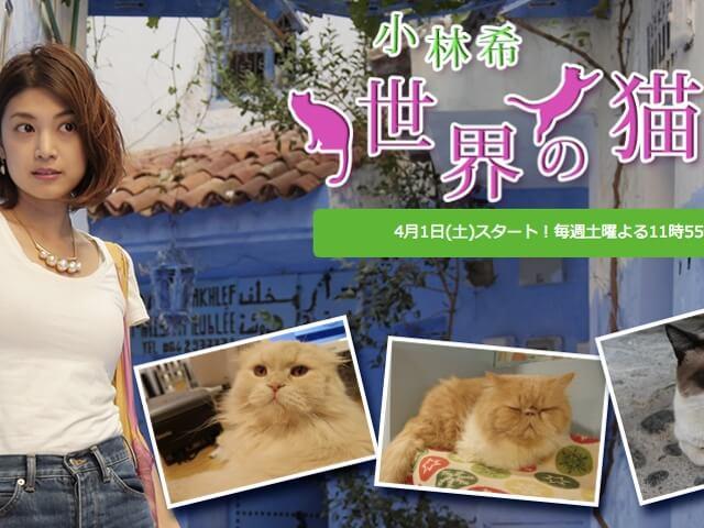 新しい猫番組「小林希 世界の猫宿」4月からBSフジでスタート