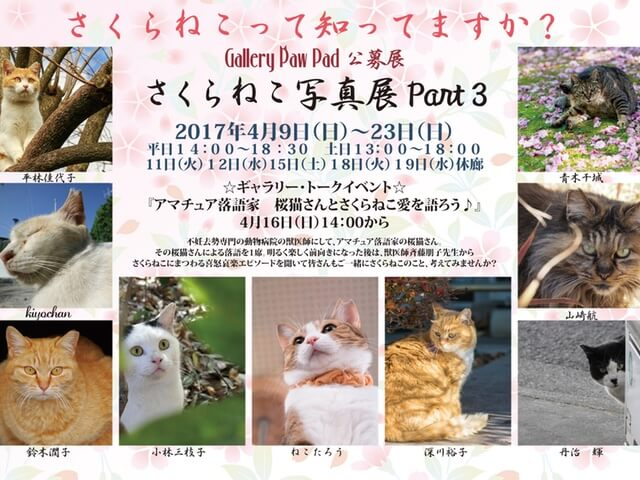 世田谷区のギャラリーで「さくらねこ写真展 PART3」が開催中