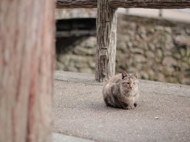 野良猫の写真イメージ