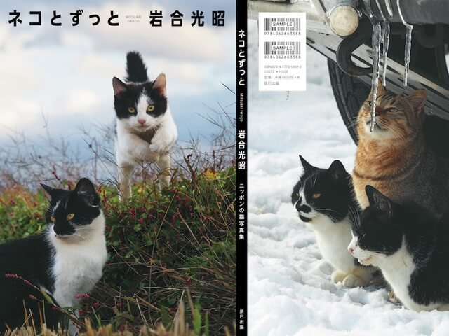 A4サイズの大迫力!岩合光昭氏の新作写真集「ネコとずっと」