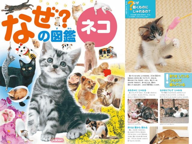 肉球から生態まで猫の疑問が分かる書籍「なぜ?の図鑑 ネコ」