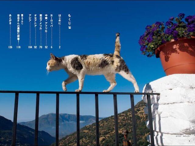 岩合光昭さんの新作フォトエッセイ「世界のねこみち」