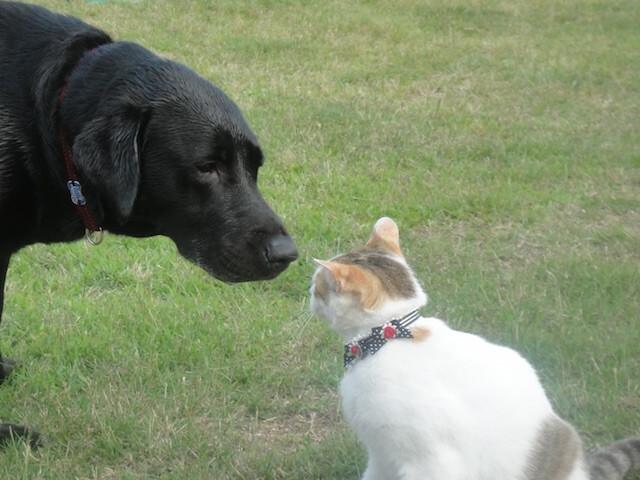愛猫になりきって学ぶ、チャリティー英会話セミナーが開催