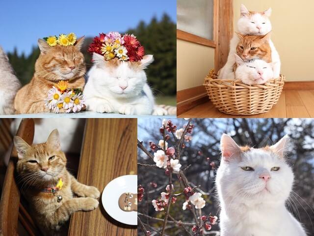 かご猫&のせ猫シロちゃんの写真展、GWに柏高島屋で開催
