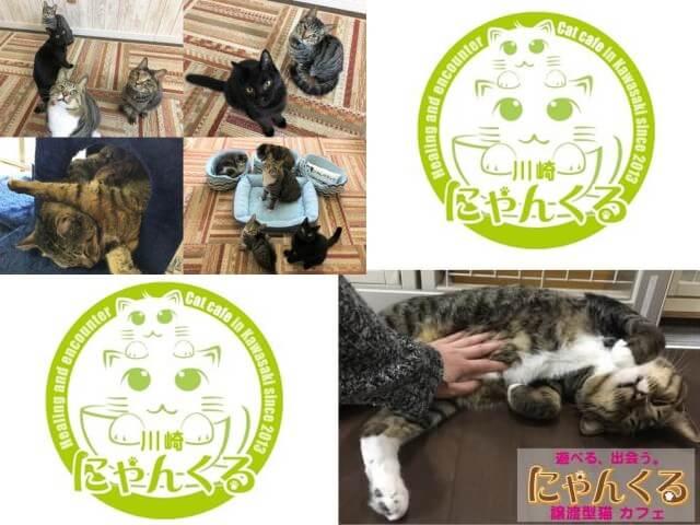 譲渡型猫カフェにゃんくる川崎店、猫エイズに感染した猫たちだけの営業を開始