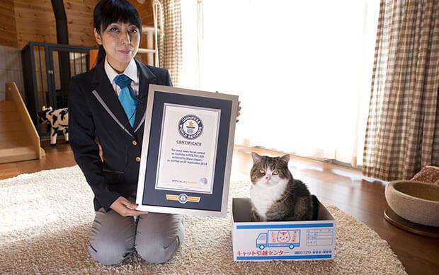 YouTubeで最も視聴された動物としてギネス世界記録に認定されたスコティッシュフォールドの猫「まる」