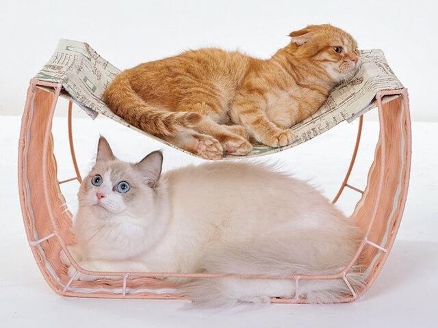 ゆらゆらハンモックで寛ぐ2匹の猫