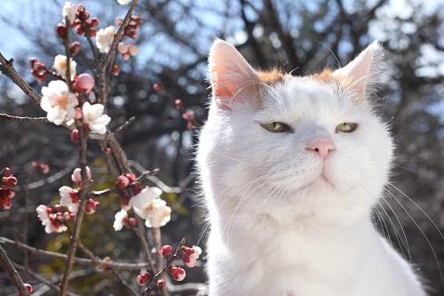 かご猫&のせ猫として人気のシロちゃん