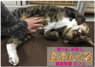 譲渡型猫カフェ「にゃんくる 」