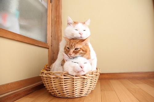 かご猫ファミリーの猫たち