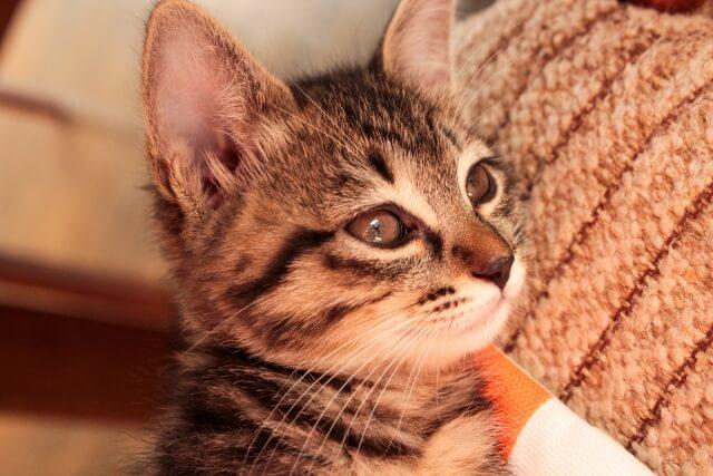 保護猫のイメージ写真